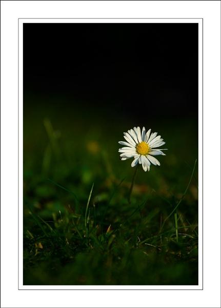 Daisy by future