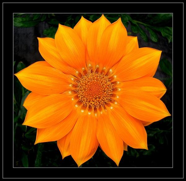 Orange Alone by fredthegnome