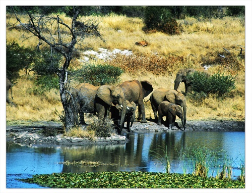 Elephants at the watering hole by bryan27