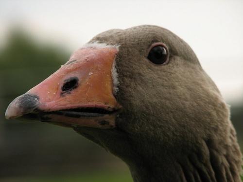 good looking bird! by tig124
