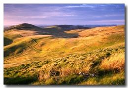 Evening Moorland