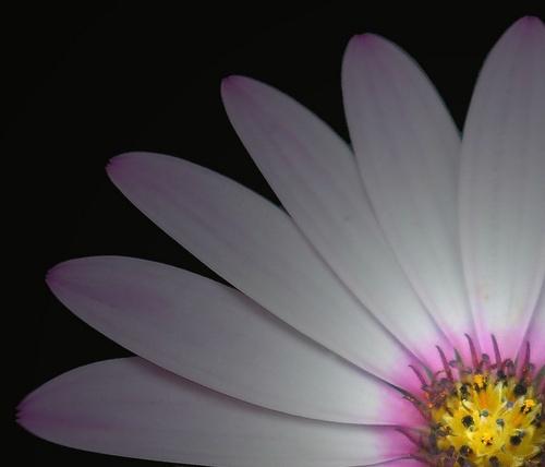 Daisy, daisy...... by Emmaelle