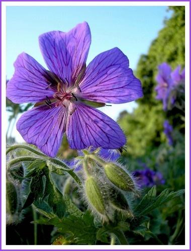 Five-petalled Flower by Eiginta