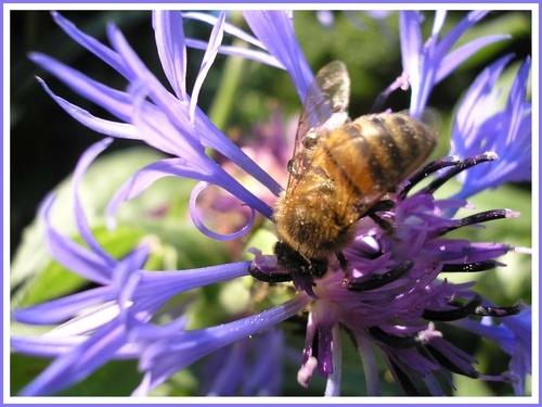 Summer Honey by Eiginta