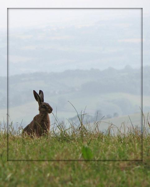 Hare by KarenFB