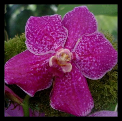 Flower at Kew by yasika
