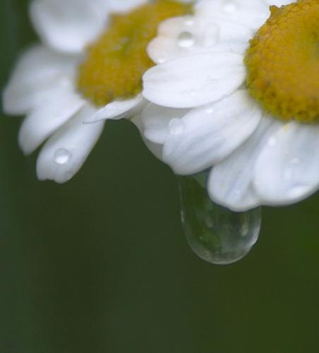 Water droplet by RipleyExile