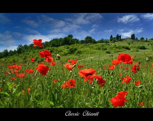Classic Chianti by rusmi