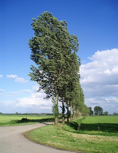 Those Trees Again 4 by conrad