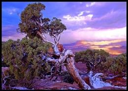 Canyonlands/Utah