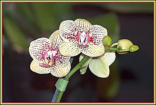 Flower by vparmar