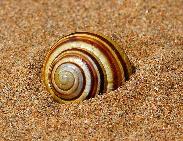 Shell by WayneG