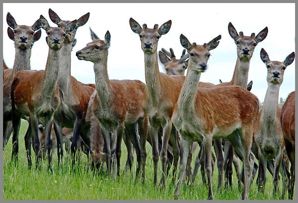 playful deer by macdaniel