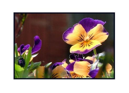Garden Flower by bft999