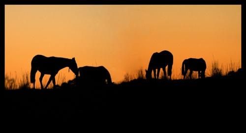 grazing at sunset by kelmac