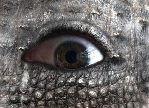 Crocodile tears by Hazel