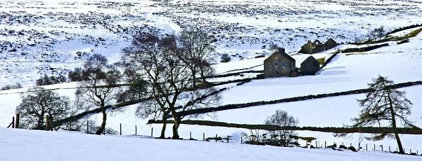 Winter Contrast by JohnBick