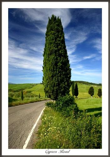 Cypress Road by rusmi