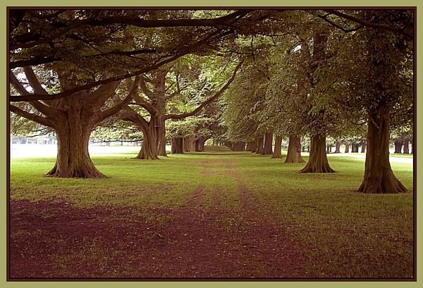 trees by vparmar