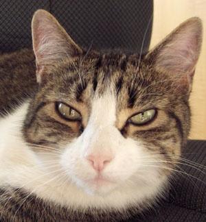 Frisky Cat by Shelley