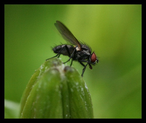 The Fly by karenpics