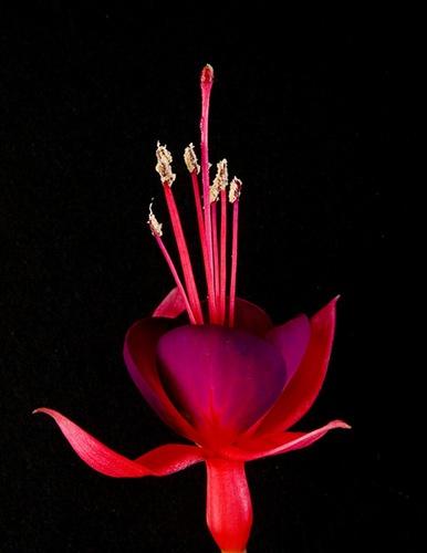 Night Flower by paulBT