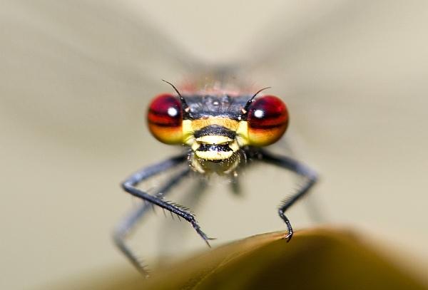 Bug Eyes by RichardB