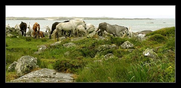 Wild Ponies by fredthegnome