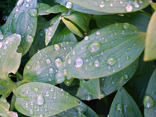Water drops by Kitty3