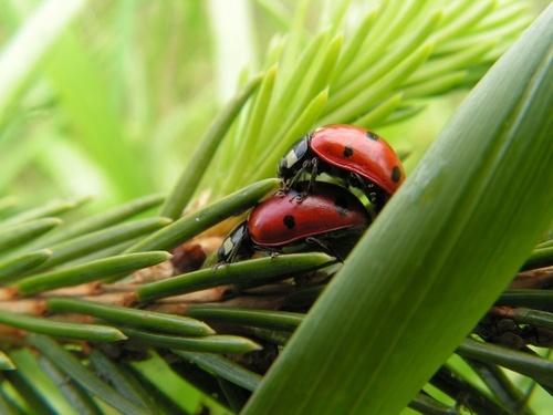 Ladybirds by UserRemoved