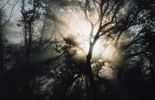 Good Morning, Lord by tarara