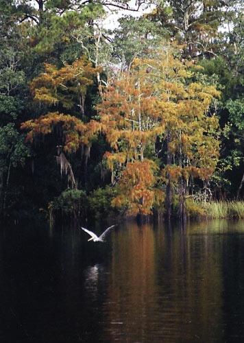 Fall scene by tarara