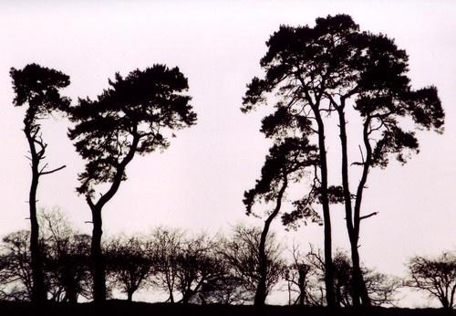 Trees by Deerman