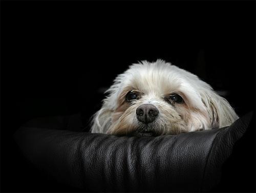 Waiting by Hazel