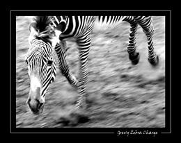 Zebra Charge