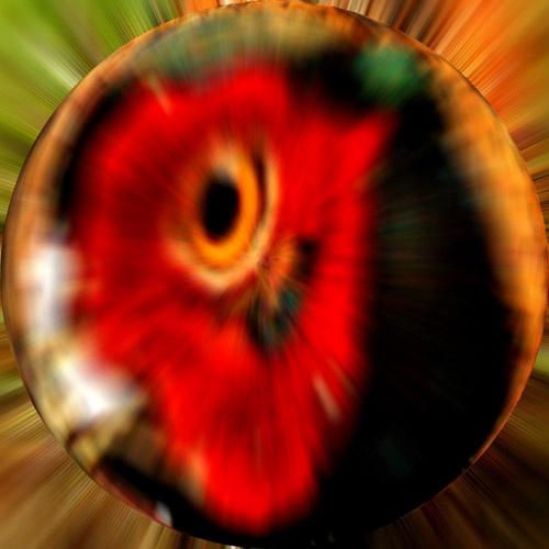 Pheasant\'s Eye by Billlee