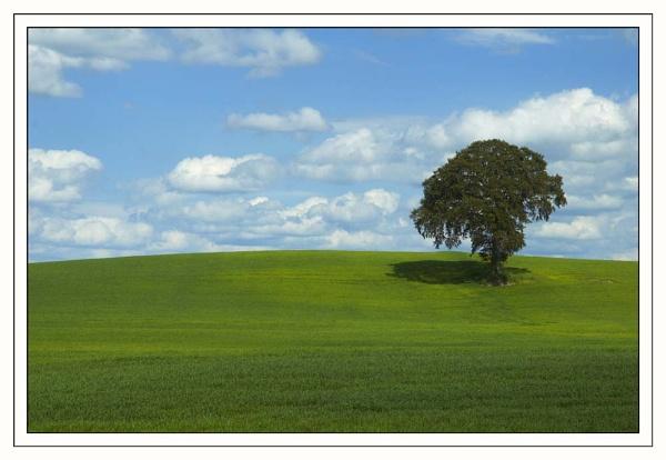 Solo Tree by Ganto