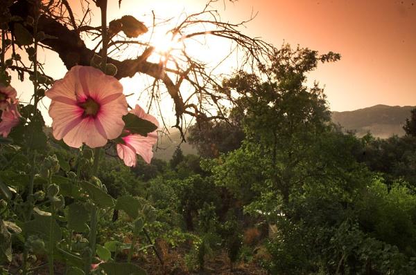 Morning Bloom by redbulluk