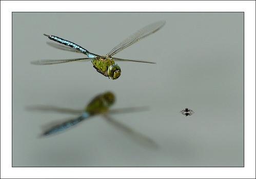 Flight Of Fancy by Miles Herbert