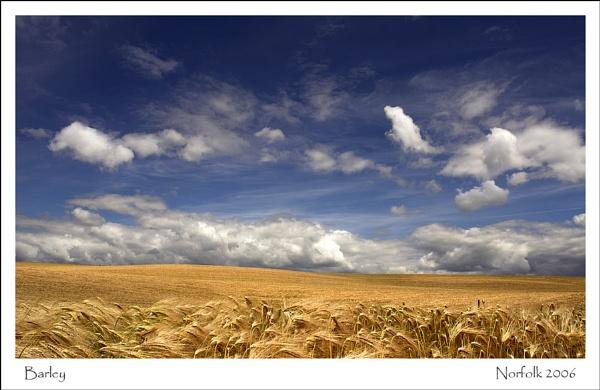Barley by KathyW