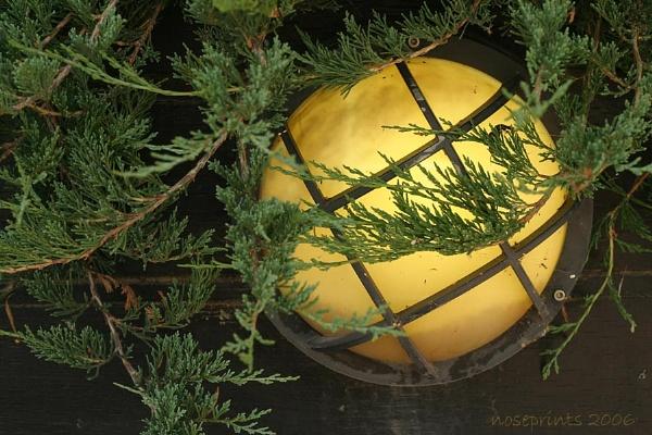 cedar by noseprints