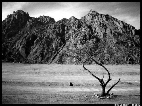 Egyptian Desert by corkonian