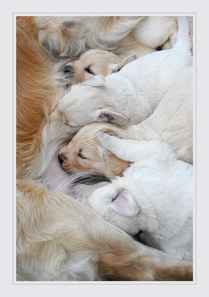 Mother\'s Milk by conrad