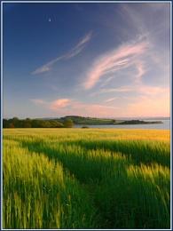 Barleycorn sky