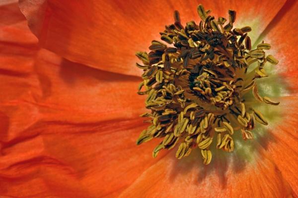 Orange by AngelaD