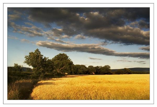 The Wheatfield by kittykam