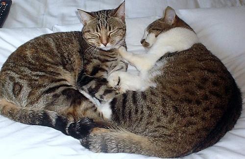 Lindi & Gina by Kitty3