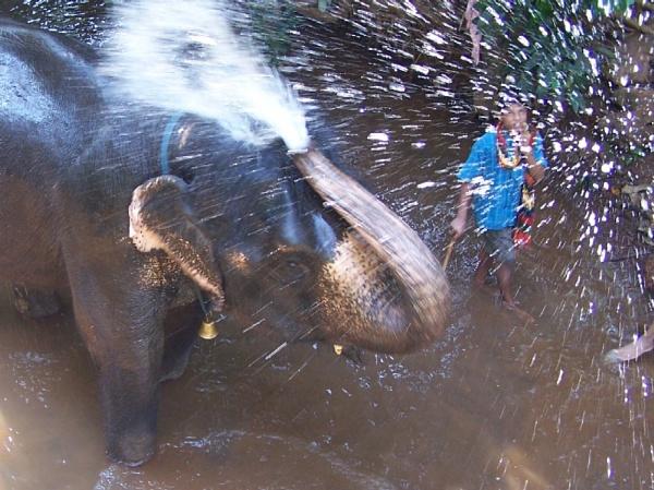 Elephant wash by mark2uk