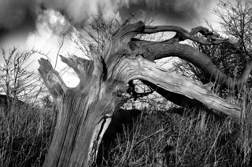 Deadwood by AnthonyR