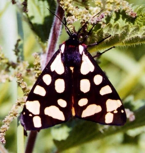 Moth by Deerman